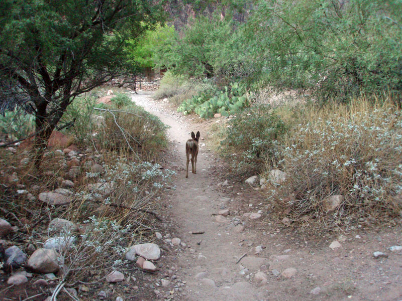 fawn leads us along trail